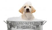 Советы по уходу за щенком
